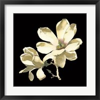 Framed Midnight Magnolias I