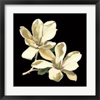 Midnight Magnolias II Framed Print