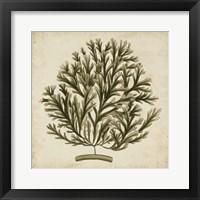 Framed Vintage Seaweed I