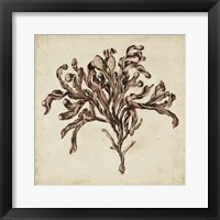 Framed Vintage Seaweed VI
