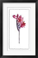 Framed Floral Watercolor V