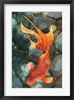 Fantail I Framed Print