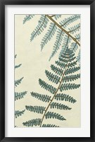 Blue Fern Trio II Framed Print