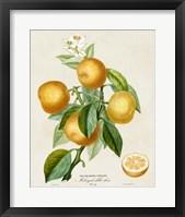 Framed French Orange Botanical III