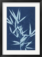 Framed Cyanotype No.2