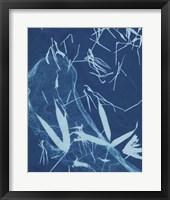 Framed Cyanotype No.5