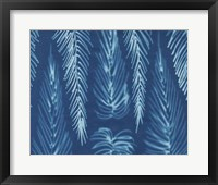 Framed Cyanotype No.7