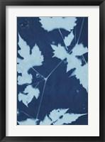 Framed Cyanotype No.9
