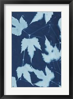 Framed Cyanotype No.10