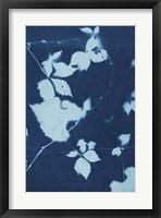 Framed Cyanotype No.11
