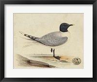 Framed Meyer Shorebirds I