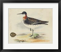 Framed Meyer Shorebirds II