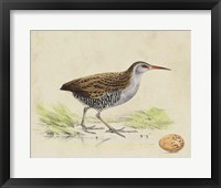 Framed Meyer Shorebirds III