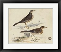 Framed Meyer Shorebirds VI
