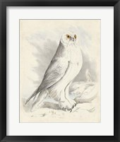 Framed Meyer Snowy Owl