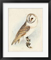 Framed Meyer Barn Owl