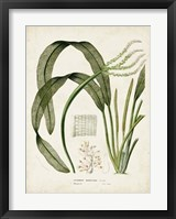 Tropical Grass I Framed Print