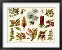 Framed Tropical Botany Chart I