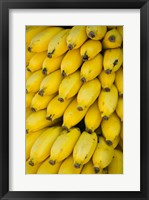 Framed Oman, Dhofar Region, Salalah. Local bananas for Sale