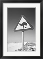Framed Qatar, Al Zubarah. Camel Crossing Sign-Road to Al-Zubarah NW Qatar