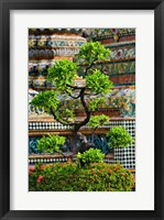 Framed Bonsai tree in front of chedi, Wat Pho, Bangkok, Thailand