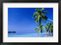 Framed Maldives, Felidhu Atoll. Man relaxing in hammock