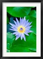 Framed Lily Flower at Wat Chalong temple Phuket, Thailand