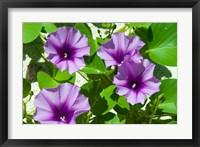 Framed Thailand, Ko Miang Island, Similan Island flowers