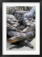 Framed Asia, Thailand Crocodiles