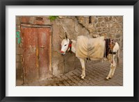 Framed Donkey and Cobbled Streets, Mardin, Turkey