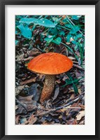Framed Orange Wild Mushroom