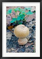 Framed Wild Mushroom Growing in Forest