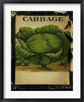 Vintage Cabbage Framed Print