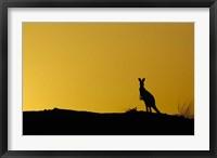 Framed Silhouette of Kangaroo, Australia