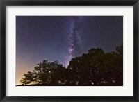 Framed Milky Way Above LiveOoak and Mesquite Trees