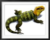 Framed Clevosaurus