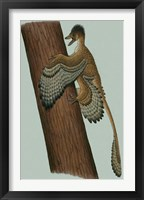 Framed Microraptor Gui