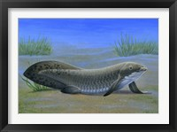 Framed Ceratodus