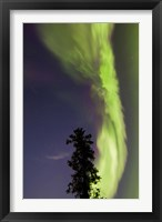 Framed Aurora Borealis with Tree and Shooting Star, Yukon, Canada