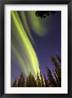 Framed Aurora Borealis with Trees, Whitehorse, Canada
