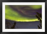 Framed Aurora Borealis with Trees, Yukon, Canada