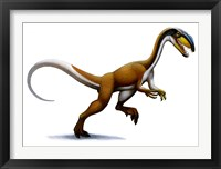 Framed Megapnosaurus