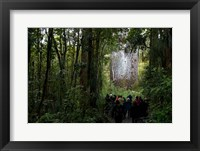 Framed Tane Mahuta, Giant Kauri tree in Waipoua Rainforest, North Island, New Zealand