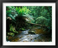 Framed Nelson Creek, Franklin Gordon Wild Rivers National Park, Tasmania, Australia
