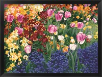 Framed English Tulips