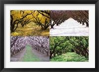 Framed Orchard through the Seasons, Central Otago, South Island, New Zealand