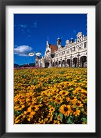 Framed Historic Railway Station and field of flowers, Dunedin, New Zealand
