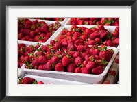 Framed Hydroponic Strawberry Production, Marlborough, South Island, New Zealand