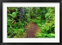 Framed New Zealand, Otago, Old Coach Walking Path, Forest