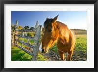 Framed New Zealand, South Island, Horse ranch, farm animal